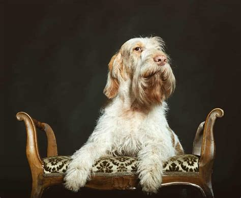 17 Italian Dog Breeds You Never Knew Existed - TheGoodyPet