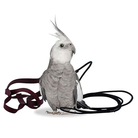 The Aviator Harness and Leash - Petite - Parrot Supplies