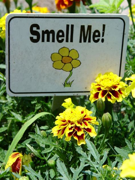 """""""Smell Me"""" is a friendly invitation to your sensory garden"""