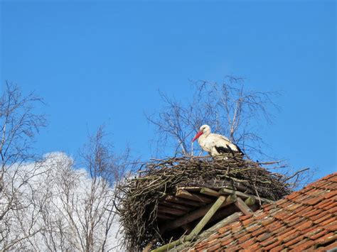 An Unlikely Tourist Attraction in Poland: Storks - The New
