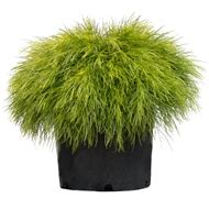 Trees & Shrubs Available At Bunnings Warehouse