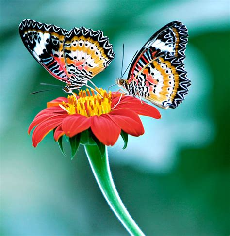 Color Feast: Butterfly Photo Collection | AmO