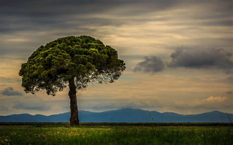 nature, Landscape, Trees, Mountains, Clouds, Grass, Field
