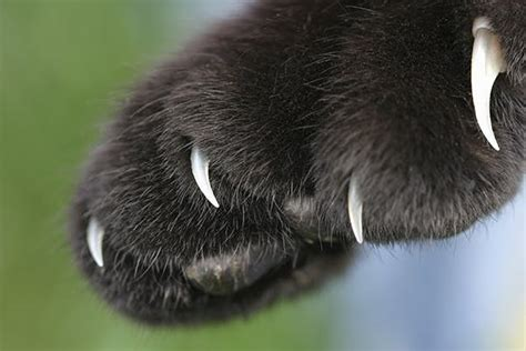 Skin and Toe Cancer in Cats - Symptoms, Causes, Diagnosis