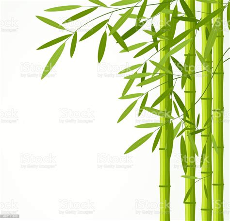Awesome Bamboo Like Plant With Green And White Leaves
